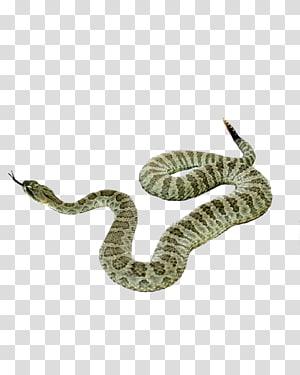 Réptil De Cobra, Cobra PNG clipart