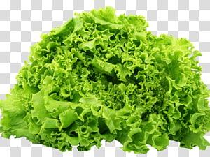 alface romana gráficos de rede portátil caesar salada vegetal, salada png