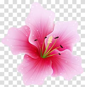Flores cor de rosa, flor rosa grande, ilustração de flor de hibisco rosa png