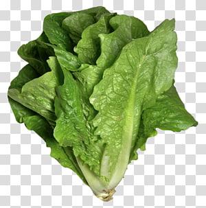 Salada Caesar Sanduíche de alface Vinagrete de alface Romana Legumes de folhas, salada de legumes png