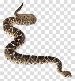 python marrom, cascavel diamondback ocidental Cascavel diamondback oriental, fundo Anaconda PNG clipart