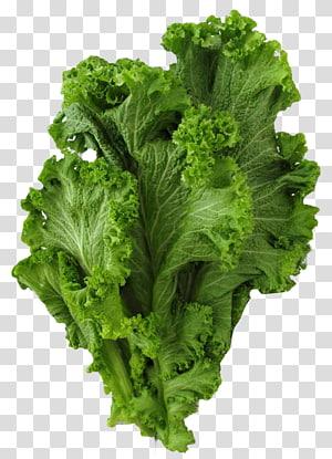 alface verde, Brassica juncea, mostarda vegetal, couve, verdes de mostarda png