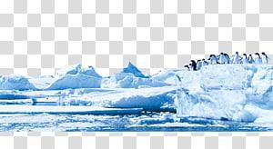 bando de pinguim em pé na geleira durante o dia, pinguim Antártica geleira iceberg, iceberg PNG clipart