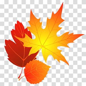 Folhas de outono, folhas de plátano marrom PNG clipart