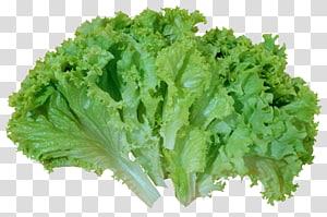 Alface Iceberg Salada Caesar Alface Romaine Vegetal, Salada Verde Alface, Alface png