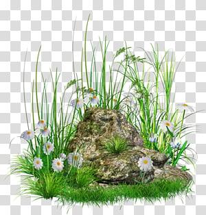 Pedra, pedra com grama e flores, pedra cercada por flores brancas PNG clipart