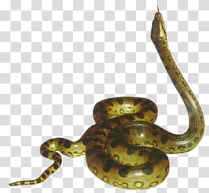 python bege, cobra, anaconda PNG clipart