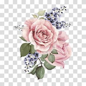 Centifolia roses Garden roses Design floral Pink Cut flowers, Aquarela pintada à mão, ilustração de flores rosa rosa PNG clipart
