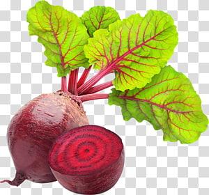 ilustração vegetal de colheita de raiz, beterraba sacarina Carpaccio Beterraba Comida, beterraba PNG clipart