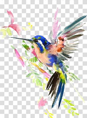 Beija-flor Pintura em Aquarela Desenho, Beija-flor, pintura de pássaro azul e rosa png