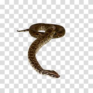 Tudo sobre cobras livro de não ficção, cobra PNG clipart