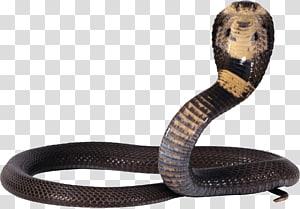 Lei de Reconciliação Orçamentária Omnibus Consolidada de Cobra de 1985 Arquivo de computador, Cobra Snake PNG clipart