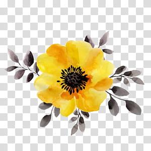 Flor amarela ilustração de pintura em aquarela, flores amarelas, close-up de magnólia amarela PNG clipart