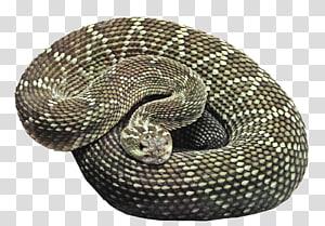 Cobra marrom árvore python, cobra PNG clipart