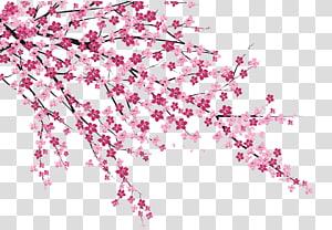 Flor de cerejeira Sakura no Hanabiratachi Pintura de parede, Flores de cerejeira, da árvore de florescência rosa png