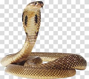 cobra marrom, cobra anaconda verde, cobra PNG clipart