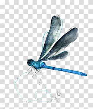 arte azul e preta da libélula, libélula, libélula da aguarela png