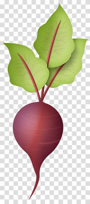 ilustração de nabo vermelho, daikon vegetal preto rabanete espanhol, rabanete PNG clipart