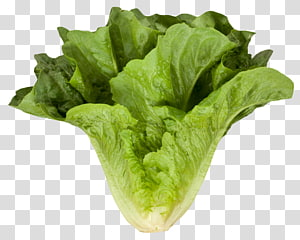 alface verde, alface romana Folha de vegetais, alface romana Cos png