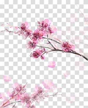Papel Flor de cerejeira Flor, pintados à mão pêssego rosa, flores cor de rosa PNG clipart