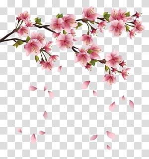 Pétala, ramo de primavera rosa linda com pétalas caindo, ilustração de flores de cerejeira rosa png