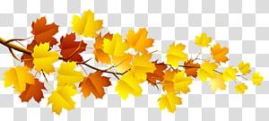 Galho de árvore de outono, galho com folhas de outono, ramo de bordo amarelo e marrom PNG clipart
