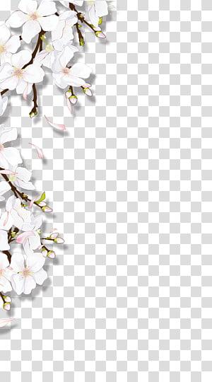 Flores desabrochando, flor branca e rosa png