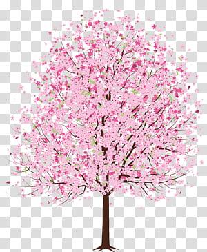 Flor de cerejeira árvore, rosa Primavera Deco árvore, rosa folheia ilustração da árvore png