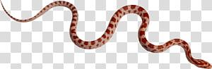 cobra vermelha, jibóia Kingsnakes Boas constrição, cobra PNG clipart