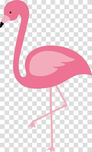 Flamingos pássaro euclidiano, flamingo vermelho, ilustração de flamingo rosa PNG clipart