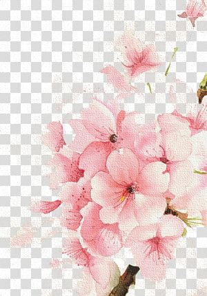 Aquarela Flores Aquarela: Pintura em Aquarela Flores Desenho, flores de cerejeira, ilustração de flores com pétalas de rosa png