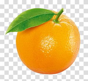 frutas cítricas, frutas de laranja com tangerina e clementina, frutas de laranja png