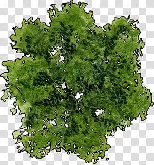 ilustração vegetal verde, árvore, uma vista superior de uma árvore verde PNG clipart