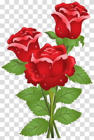 Borboleta rosa flor céu, rosas, três rosas vermelhas PNG clipart