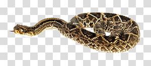Cascavel, Cobra PNG clipart