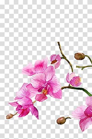 Arte digital de flor de pétalas de rosa, Aguarela Flores, Pintura em Aquarela Desenho, Aguarela flores png