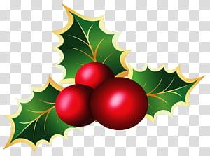 Álbum de visco de visco de Natal, visco de Natal, folha de bordo e ilustração de cereja png