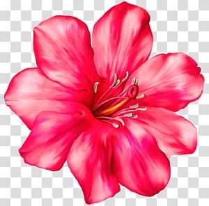 Flor, flor exótica rosa, flor vermelha png