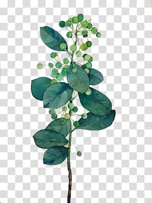 Pintura em aquarela de folhas, folhas de aquarela, pintura de planta verde e branca PNG clipart