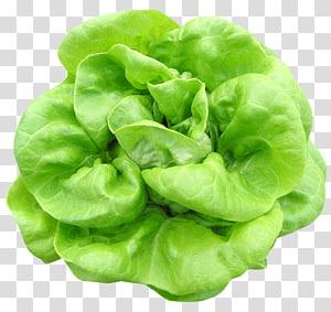espinafre verde, alface Butterhead Alface de espinafre vegetal Alface romana, alface Butterhead png