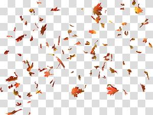 folhas de plátano, folhas de outono cor folhas de outono cor de folhas de plátano, folhas de outono PNG clipart