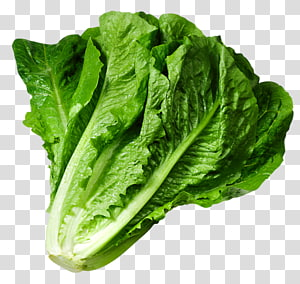 vegetais verdes, alface Butterhead alface Iceberg salada Caesar, alface verde folhosos png