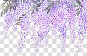 Glicínias roxas de flores de lavanda, flores de glicínias de lavanda pintadas, flores roxas png