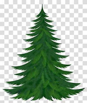 ilustração de pinheiro, pinheiro, pinheiro PNG clipart