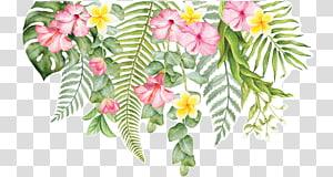 flores de corte decalque de parede design floral, flor tropical, rosa hibuscus PNG clipart