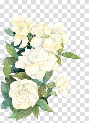 Flor se (nós), flor, ilustração de flores brancas png