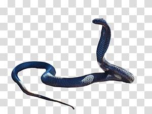 Cobra Rei cobra, cobra PNG clipart