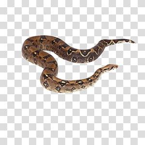 Crotalus cerastes Réptil de cobra Boa constrictor, cobra PNG clipart