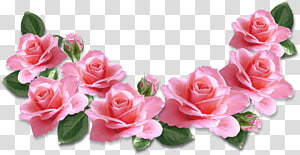 Rose Flower Pink, Pink Roses Decoration, ilustrações de rosa rosa PNG clipart