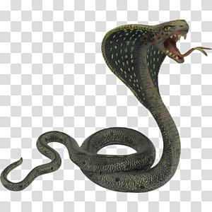 Cobra indiana cobra rei cobra, cobra cobra s PNG clipart